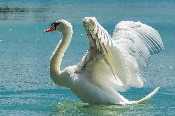 Imagen blog de Consultorio: De patito feo a majestuoso cisne