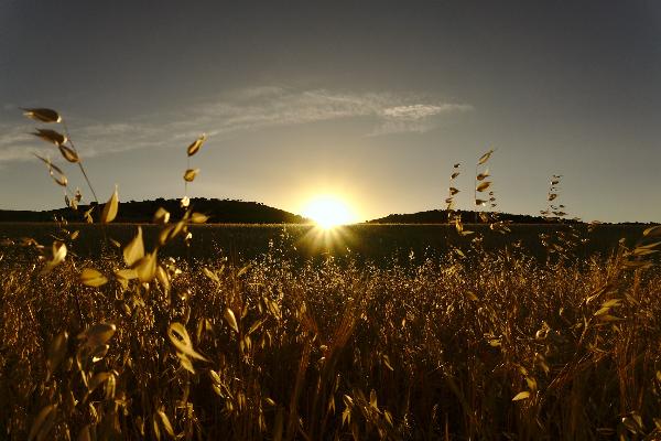Imagen blog de Consultorio de Fondos: es tiempo de sembrar